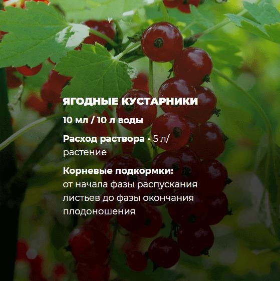 Удобрение для ягодных кустарников Находка