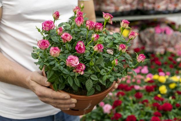 Удобрение для комнатных растений и цветов ТМ Находка