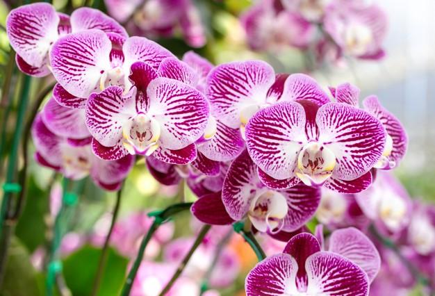 Удобрения для орхидей ТМ Находка