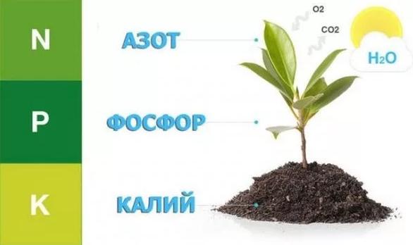 Удобрение для комнатных цветов азот, фосфор, калий